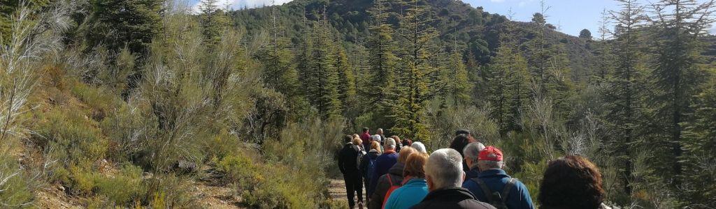 Fotografía de un grupo de personas en fila mientras hacen una excursión en medio del bosque