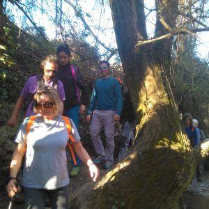 Varias personas pasan al lado de un árbol mientras hacen senderismo